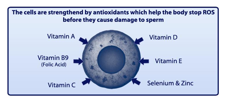 Prelox - How antioxidants help