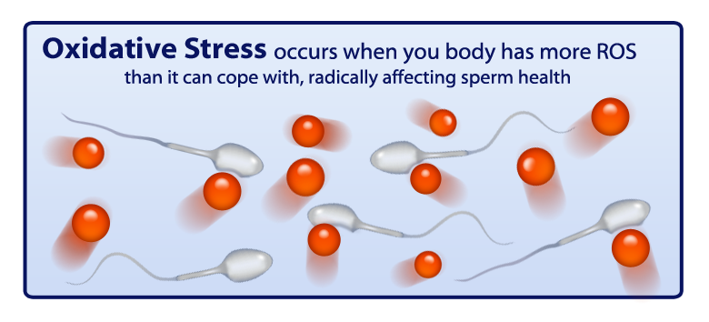 Prelox - Oxidative Stress